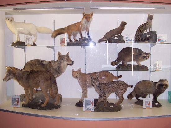 Museo Naturalistico Degli Alburni