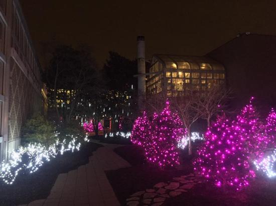 Franklin Park Conservatory Christmas Lights.Hibiscus Flower At Franklin Park Conservatory Picture Of