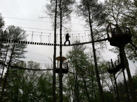 The Beanstalk Journey Zipline: photo1.jpg