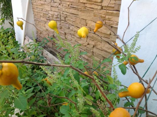 Bioma Boutique Hotel Mompox: Interesting plants