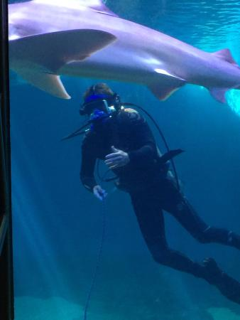 Ocean Activities Center: The guy diving with the Sharks!
