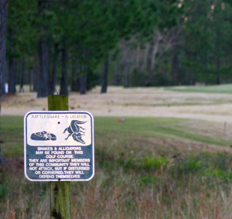 Shell Landing Golf Course: never saw either......