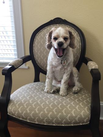 Navasota, Teksas: Sweetie alwalys is happy to stay at the inn