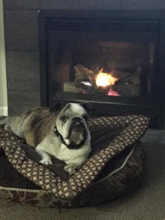 The Landing at Newport Condominium-Hotel: Living area with my dog enjoying the fireplace.