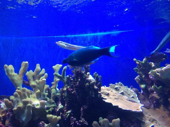 lots of cool fish - Picture of Maui Ocean Center, Wailuku ...