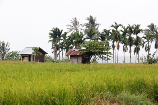 Arlen Nova's Paradise Guesthouse: Auf dem Fußweg zum Guesthouse