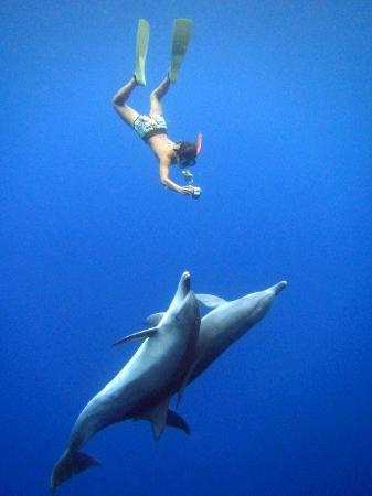 Sumoguri no Gakko: swimming with dolphine! (B-plan)