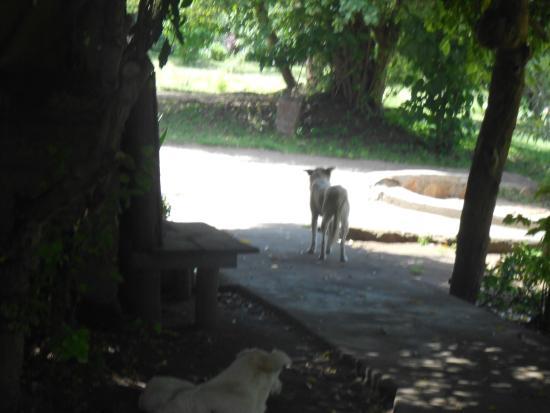 Oldarpoi Mara Camp: pets inside oldarpoi
