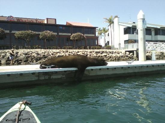 Channel Islands Harbor friend taking nap