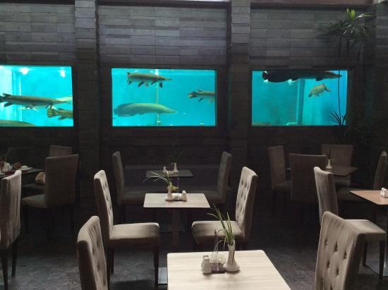 nice akuarium picture of serela merdeka bandung tripadvisor rh tripadvisor com sg
