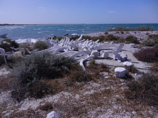 Laguna San Ignacio: Scheletro di balena