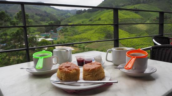 Hasil carian imej untuk ladang teh boh cameron highlands makan