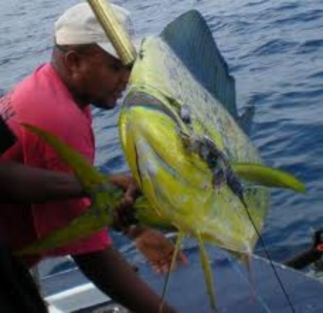 Deep sea fishing picture of big fish sports fishing for The big fish