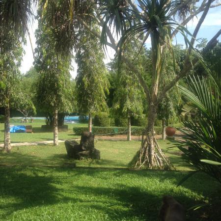 Shanthi Lanka Ayurveda Resort : Aussicht auf den Pool
