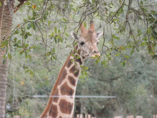 Central Florida Zoo U0026 Botanical Gardens Photo
