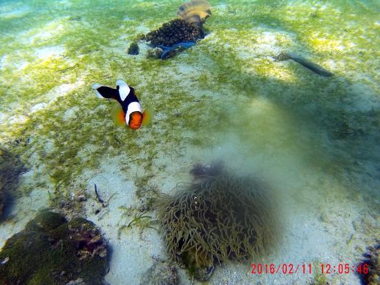 Badladz Dive Resort: Boat diving