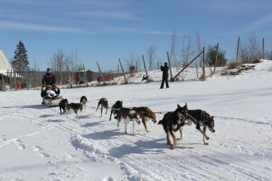 Eden Mills, VT: family dogsledding trip