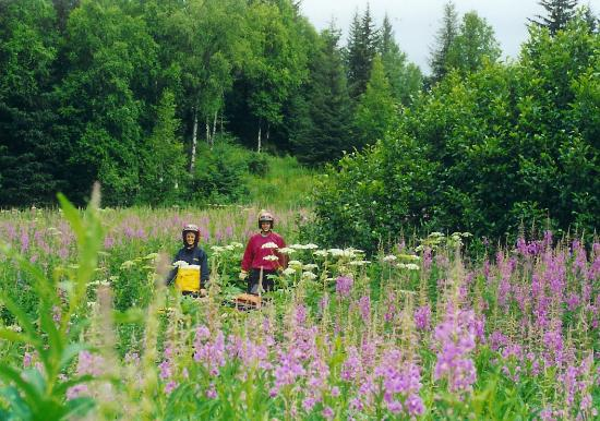Eagle River, AK: A couple exploring the upper meadow ~fireweed is beautiful!