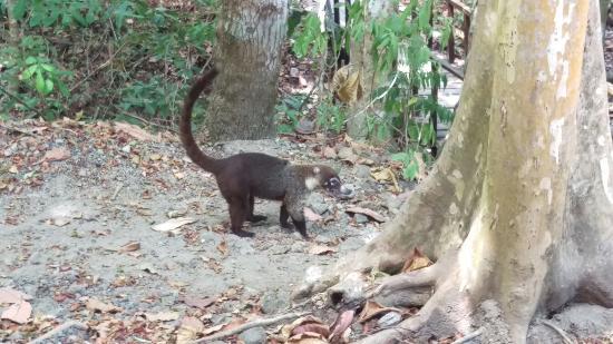 Nicoya, Costa Rica: IMAG1825_large.jpg