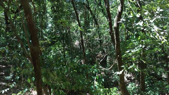 Nicoya, Costa Rica: IMAG1804_large.jpg