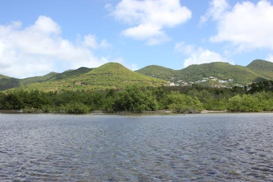 Simpson Bay, St Martin / St Maarten: The Mangrove