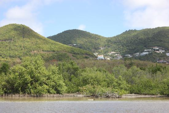 Simpson Bay, St Martin / St Maarten: Closer View of the Mangrove