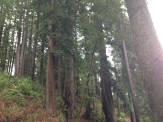 Alfred A Loeb State Park: Majestic trees