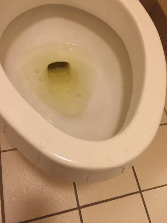 Baymont by Wyndham Pearl: Pubic hairs and pee on commode in the room as soon as we checked in