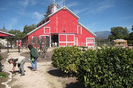 Santa Paula, CA: Old red barn in back