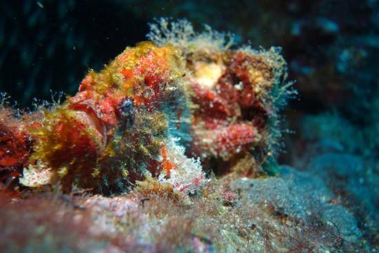 Santana Dive Center Phuket