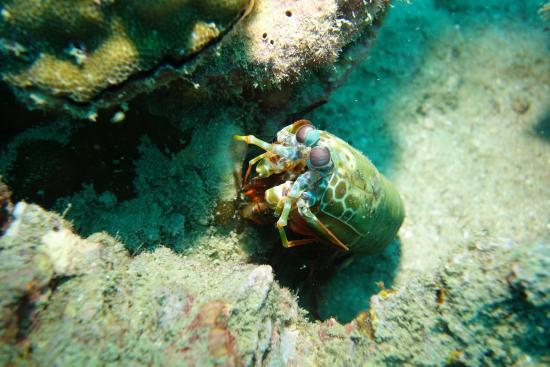 Santana Dive Center Phuket: Crab