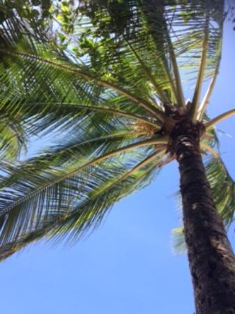 Kewarra Beach, Australia: Perfect views. Picture perfect