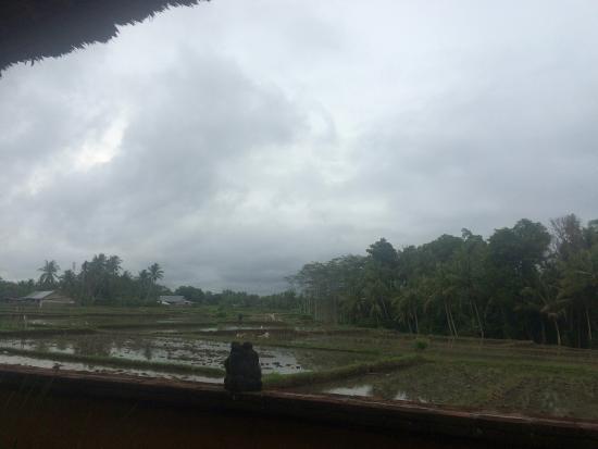 Mandala Desa: photo2.jpg