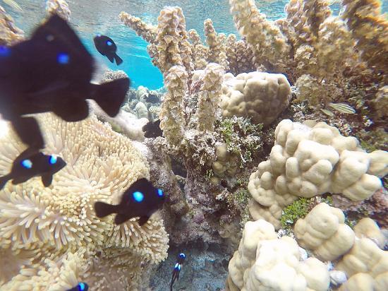 Raiatea, French Polynesia: Le jardin de corail