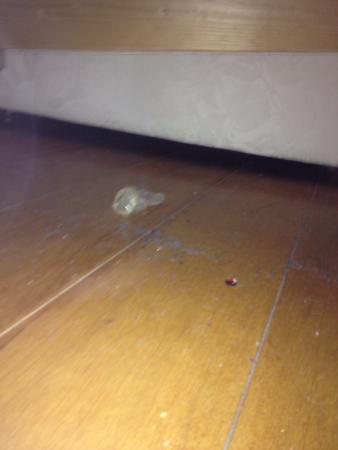 Atlanta Hotel: Used condom underneath bed... Mouldy curtains and coffee making facilities you have to pay for.