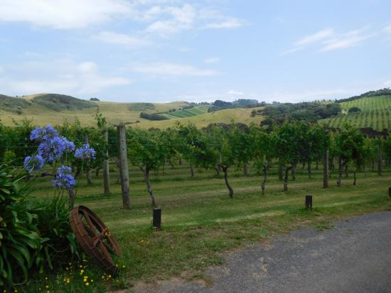 Waiheke Island, New Zealand: On the walk