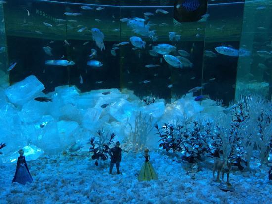 Pingviner - Picture of Bergen Aquarium, Bergen - TripAdvisor