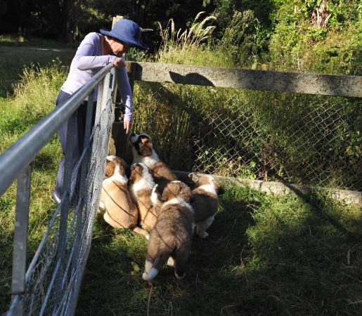 Tarata Fishaway: Rocky the deer; the St Bernard puppies; and the view from The River Retreat...