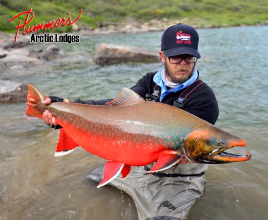 Image gallery artic char for Arctic char fish