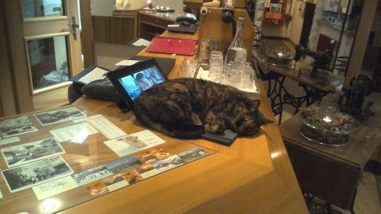 Hotel Bristol: Hotel Cat - Sleeping on Duty
