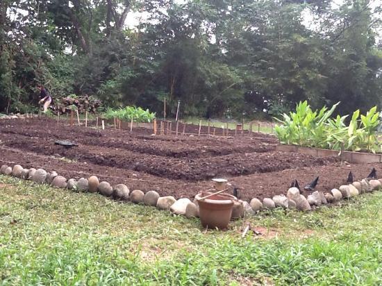 Costa Rica Yoga Spa: Starting the Garden 2014
