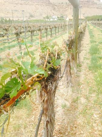 Palisade, CO: Vines@Canyon Wind