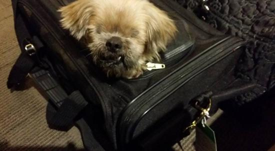 The Lafayette Hotel: Muffin getting ready to tour Nola