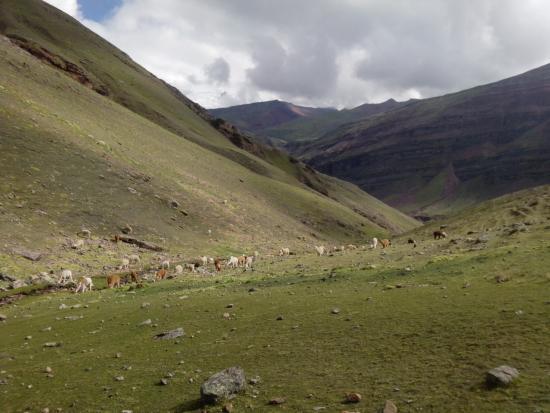 Andes Path Peru