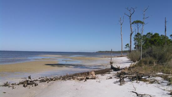 on the bay side of gap point picture of saint george island state rh tripadvisor com