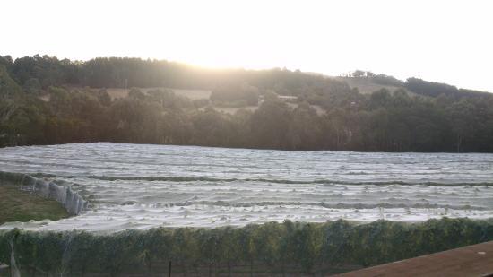 Gisborne Peak Winery Eco-Cottages: Sunset view