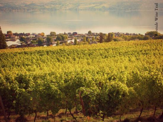 Fall Vineyard | Westside Wine Trail | West Kelowna | Okanagan Valley