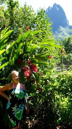 Moorea, Polinezja Francuska: Widok na Belvedere