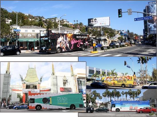 City Safari Hollywood