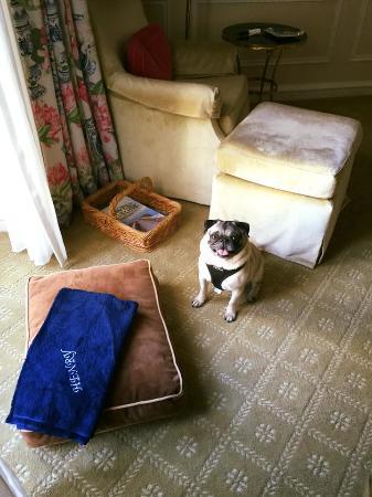 pets are truly treated like family at the peninsula beverly hills rh tripadvisor com